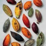 Cacaoymascacao