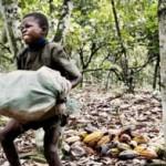 niño cargando cacao