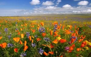 01 de Abril - Meditación Flor de Luz+Ritual de Primavera